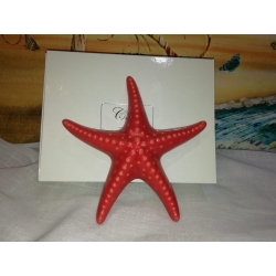 Stella Marina ceramica : linea scoglio