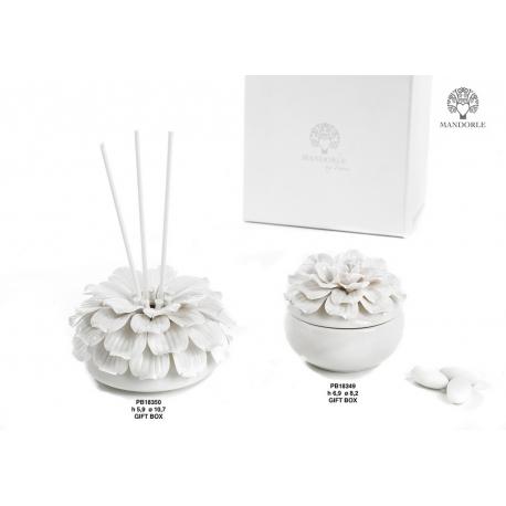 Collezione fiore bianco